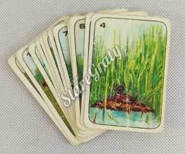 karty-zwierzeta-1